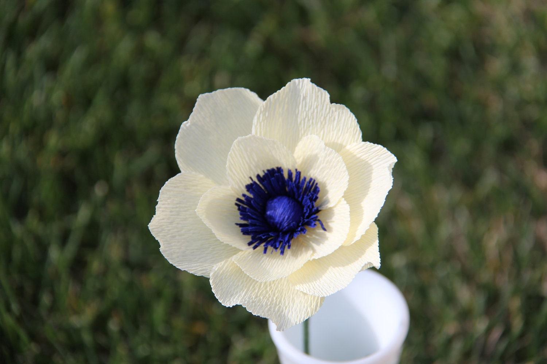 Cream Anemone flower