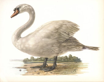 Mute Swan Print Demartini Book Plate SALE Buy 3, get 1 FREE