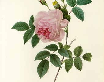 Redoute Pink Rose Print Book Plate SALE~~Buy 3, get 1 Free