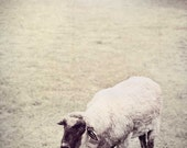 Lost Sheep - Fine Art Nature Photography 5x7- BOGO SALE