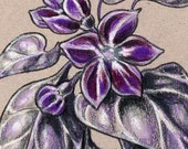"SALE Purple Hot Pepper Art Original Colored Pencil Illustration 5""x5"" - ""Black Pearl Pepper"""