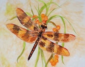 Halloween Pennant Dragonfly Colored Pencil Drawing 8 x 10 Original Fall Decorating Cottage Chic