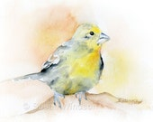 Goldfinch Watercolor Painting - 11 x 14 - Giclee Print - Bird Art