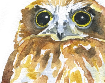 Owl Watercolor Painting Note Card Set