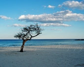 Lonely tree on the beach original photography print 5x7 / home decor / wall decor