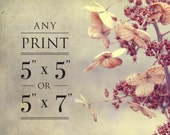 Any print at 5x5 or 5x7 - Fine Art Photo Prints
