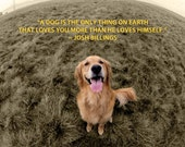 A Dog's Love - 8 x 10 Print