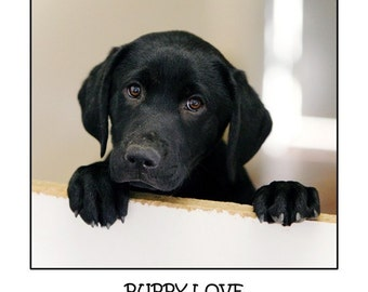 Dog photography, Puppy, Love, Labrador Retriever, Kid's Room, Cute, Black