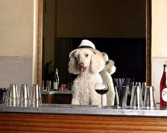 Dog Photograph, Standard Poodle, Bar, Drinking, Wine, Happy Hour, Fedora, Hat, Restaurant, Bartender