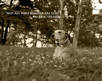 Dog photography, Rhodesian Ridgeback, Greyhound, Senior Dog, Quote Print, Wander, Roam, Meadow, Tolkien, Pearls