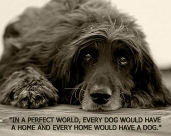 Dog Photography, Afghan Hound, Black Dog, Senior Dog, Quote Print, Duotone Print, Dog Lying, Wood Deck