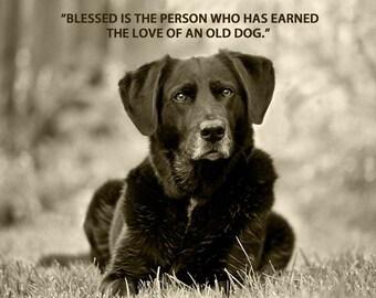 Dog Photography, Senior Dog, Black Lab, Quote Print, Dog Art, Duotone Image