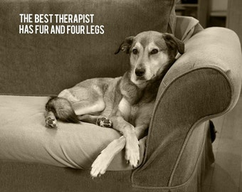 Dog Photography, Therapy, Therapist, Shrink, Couch, Psychology