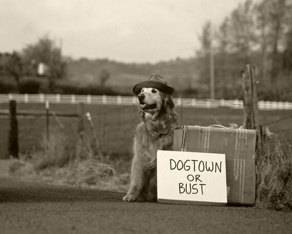 Dogtown or Bust - 8 x 10 Print