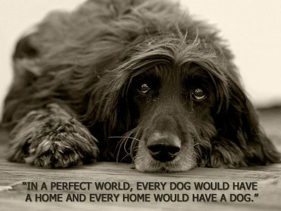 In A Perfect World, Every Dog Would Have A Home - 8 x 10 Print