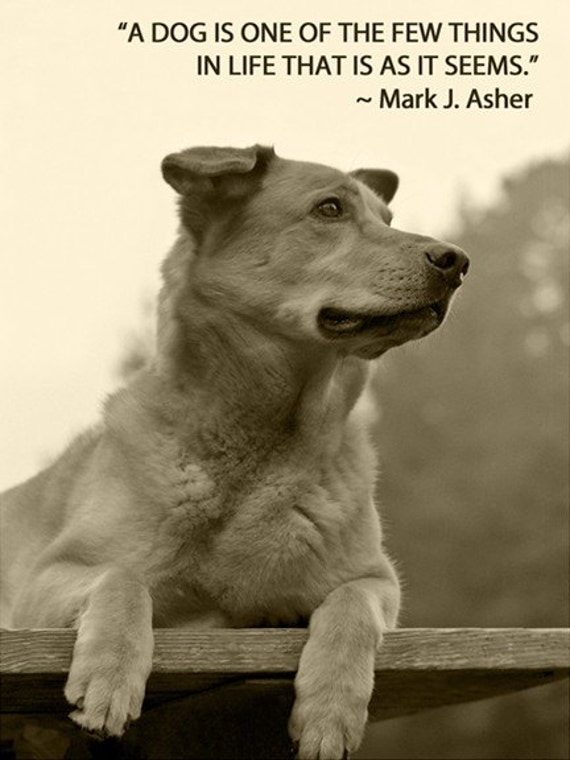 essay on autobiography of a stray dog Npr coverage of a dog's life: the autobiography of a stray by ann m martin news, author interviews, critics' picks and more.