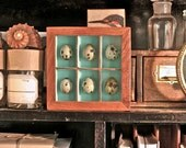 Quail Egg Shadow Box