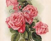 c1895 vintage flower print DARK PINK ROSES chromolithograph art