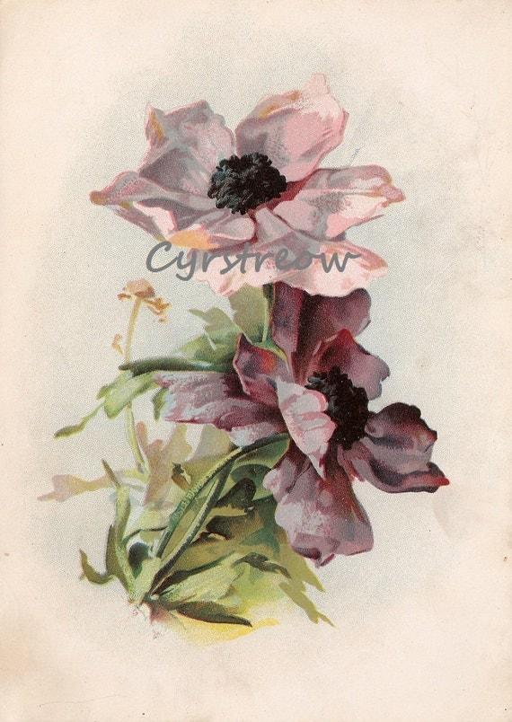 vintage flower print - PURPLE FLOWERS - Victorian botanical artwork from the 1890s