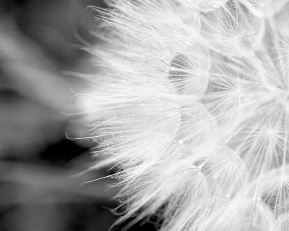 black and white photography dandelion fine art nature print silver grey winter white black minimalist monochromatic 8x10 print