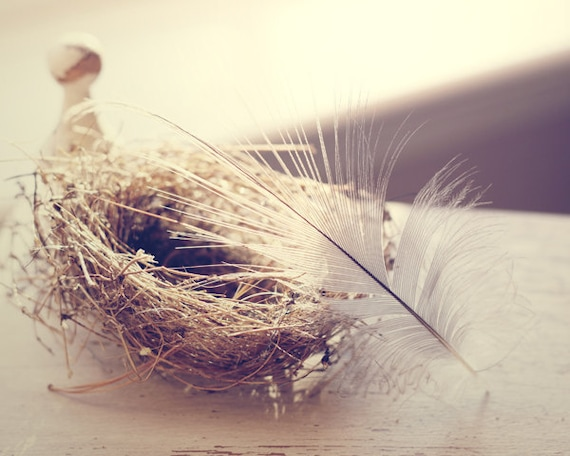 feather art bedroom decor bird nest photography neutral wall art still life photograph rustic home decor living room art feather print
