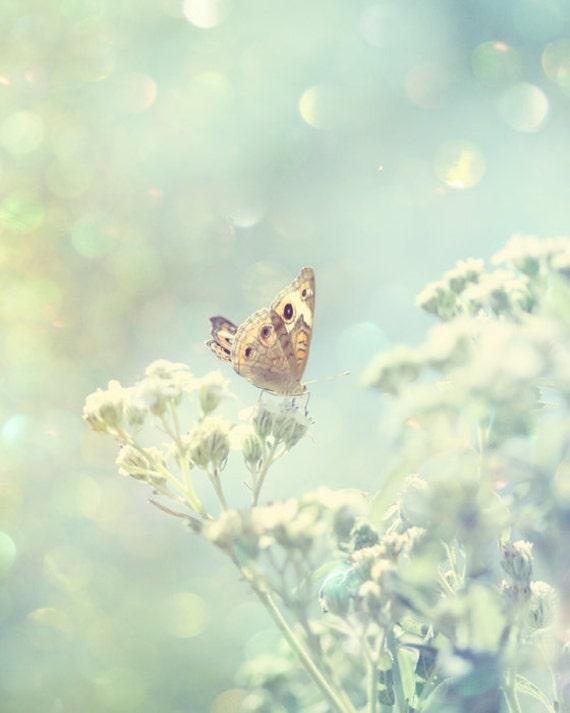 butterfly art, nature photography, butterfly print, bedroom art, light blue wall art, butterfly photo, living room art, Fine art photograph
