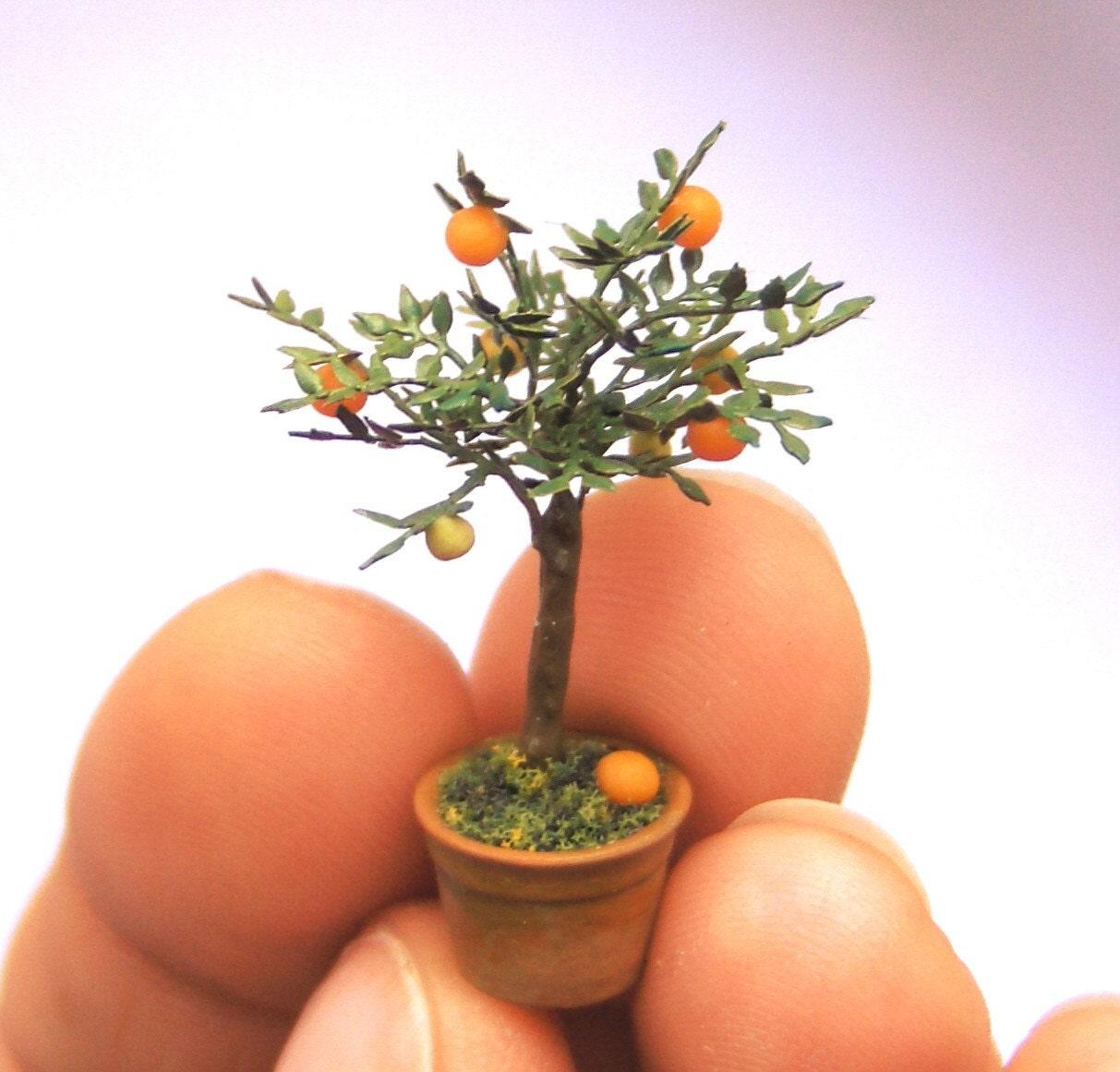 Гелиос цветы садовые фото