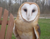 Barn Owl on Deck Photo Greeting Card