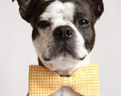 Yellow and white checkered Dog Bow-tie