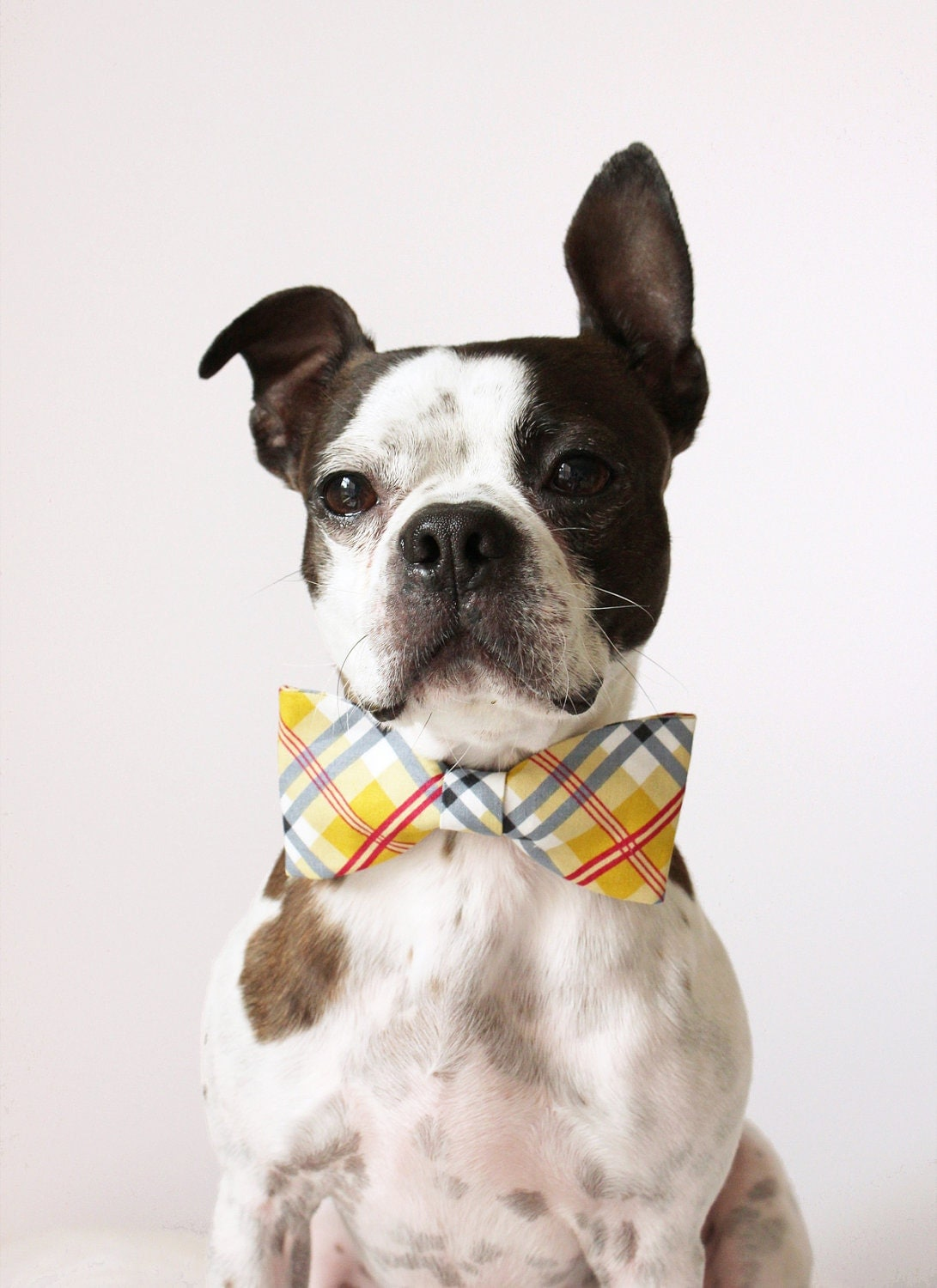 Yellow Plaid Dog Bow-tie Handmade Dog by LittleBlueFeathers