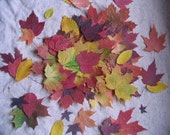 Fall Leaves Real Pressed Dried-Fall Wedding Decorations