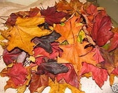 Fall Leaves-FALL WEDDING COLOR Natural Real Dried Curl