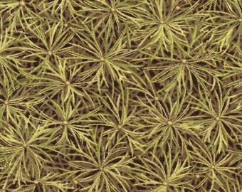 The Light Pines  - P and B Textiles - Fat Quarter