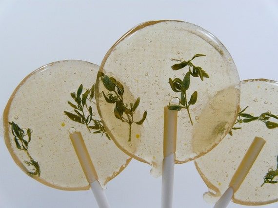 Orange Blossom Thyme - Lollipop - Perfect Gardener or Herb Lovers Gift - Mother's Day