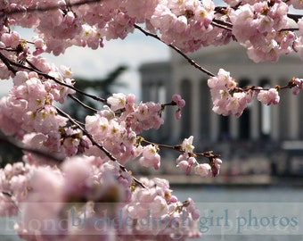 "Cherry Blossom Festival and the Jefferson Memorial (8"" x 10"" photographic print)"