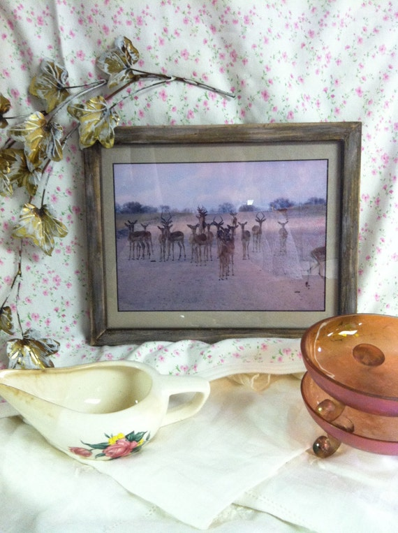 Mesmerizing Antelope Picture Altered Frame