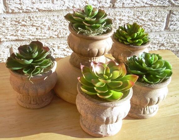 5 Solo Succulents in Earthen Pots
