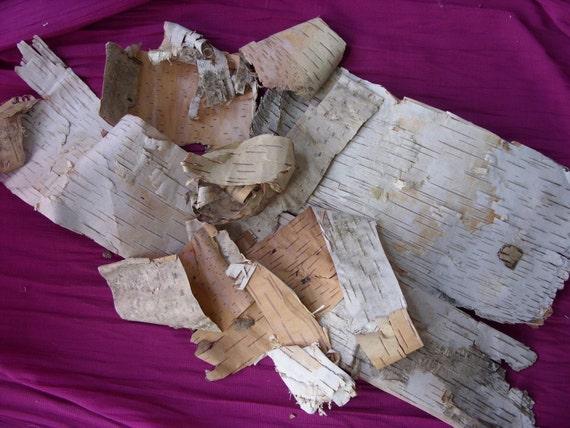 Natural White Birch Bark Right off  the Tree Destash