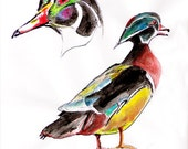 Drawing Illustration Wood Duck - small sketch