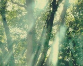 Custom Order for Joanna ~ 16 x 20 ~ Sunbeams through the Old Oak ~ Please do not buy if you are not Joanna