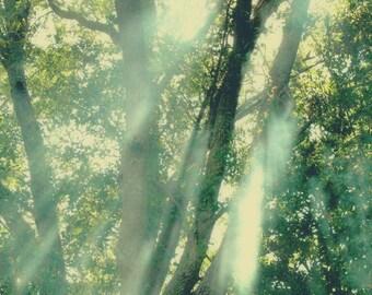 Sunbeams through the Old Oak -Fine Art Photo IllustrationMultiple sizes