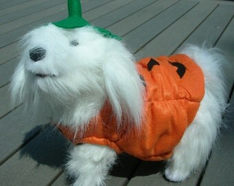 SALE 15 to 30 lb  Doggy Pumpkin Halloween Costume