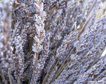 Organic  Dried Lavender 10 bunches