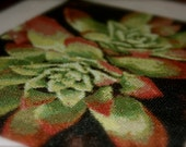 SUCCULENTS - Cross-Stitch PATTERN ONLY