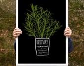 "Kitchen Art Poster print Rosemary 20""x27"" - archival fine art giclée print"