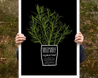 "Kitchen Art Poster print Rosemary 20""x27"" - archival fine art giclée print"