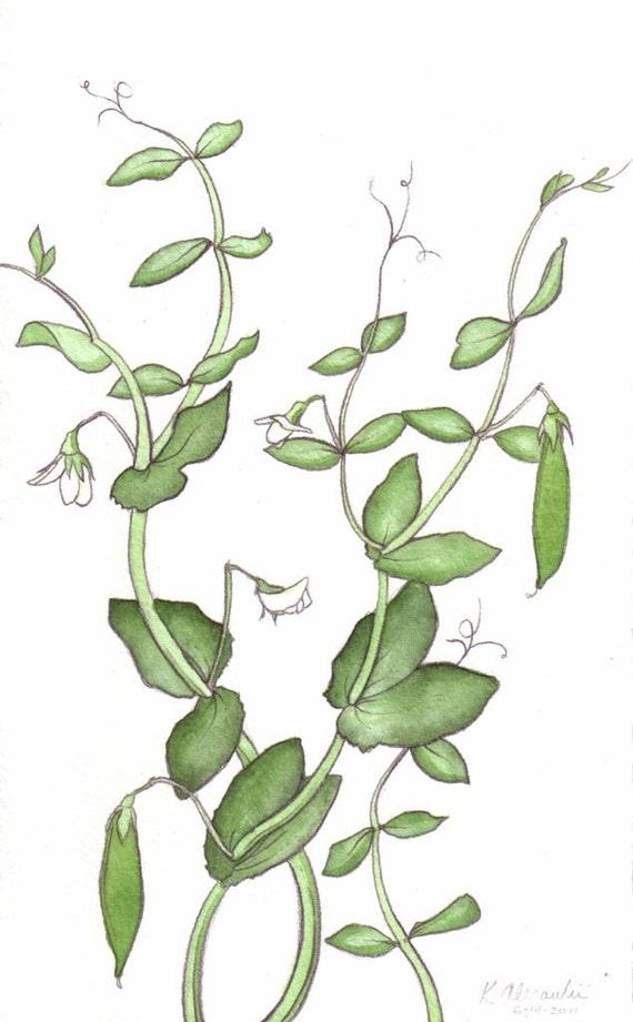 Pea Vines - Watercolor Original Art
