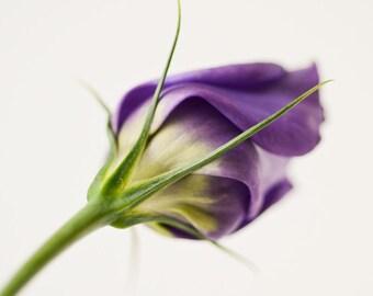 Lysianthus ||| Flower Photograph | Soft Purple Photograph | Bedroom Wall Art | Romantic Art