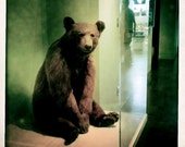 Mr. Bear at the Museum