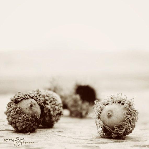 awesome acorns-fall photography - autumn decor - autumn photo - black and white  (8 x 8  Original fine art photography prints) FREE Shipping